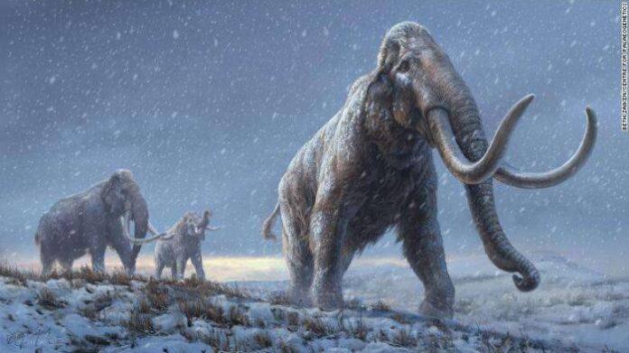 ภาพวาดช้างแมมมอธทุ่งสเตปป์