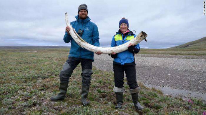 ผู้เขียนงานวิจัยนี้ Love Dalén (ซ้าย) และผู้ร่วมเขียน Patrícia Pečnerová ถืองาช้างแมมมอธ บนเกาะ Wrangel ประเทศรัสเซีย